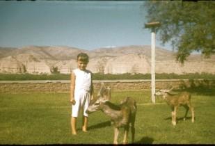 Cheryl Gillespie 1960